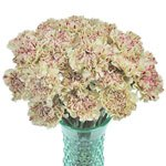 Vintage Candy Cane Carnation Flowers in a Vase
