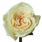 Vintage Promenade Garden Rose Stem