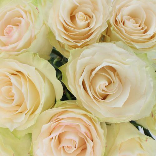 Vintage Wedding Spirit Rose Up Close