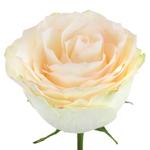 Vintage Wedding Spirit Rose Stem
