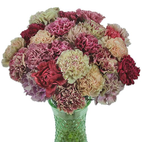 Mixed Color Vintage Carnations