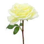 Vitality Ivory Garden Rose Stem