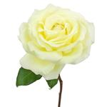 Vitality Ivory Garden Rose Side Stem View
