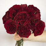 Walk of Fame Red Garden Wholesale Rose Bunch in a hand