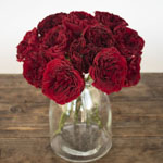 Walk of Fame Red Garden Wholesale Roses In a vase
