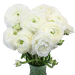 Fresh Ranunculus White Flower