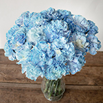 White Blue Tinted Elite Carnation Flowers in a Vase