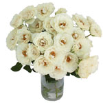 White Cloud Garden Wholesale Roses In a vase