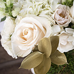 Creamy white rose with golden tinted ruscus