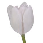 White Dream Tulip Bulk Wedding Flower Blooms