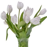White Dream Tulip Wholesale Flower In a vase