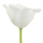 White Liberstar Tulips Wholesale Flower Side Stem