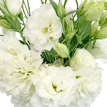 White Designer Lisianthus Flower for October to May Delivery