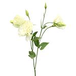 White Bulk Lisianthus Flowers
