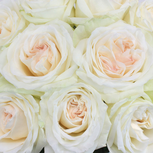 Naturally White Garden Rose Express Delivery