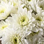 White pom DIY wedding flowers