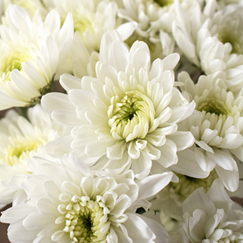White pom DIY wedding flowers