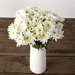 White pom flowers for delivery