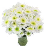 Bulk White Polaris Cushion Flowers