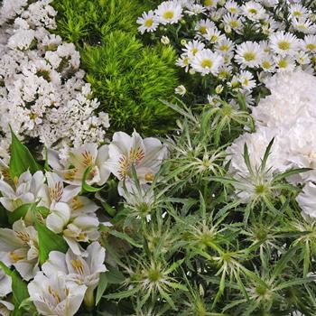 White Textured Filler DIY Flower Kit Up Close