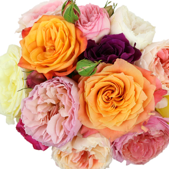 Wholesale Assorted Garden Roses up close