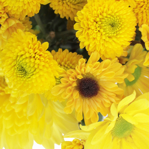 Sunny Flower Days Pom Pack