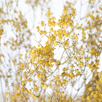 Smiley Face Yellow Dried Baby's Breath