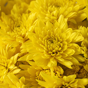 Yellow pom DIY wedding flowers