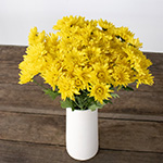 Yellow pom flowers for delivery