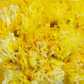 Yellow Enhanced Carnation Flowers