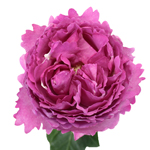 Yves Piaget Peony Rose Stem