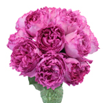 Yves Piaget Peony Wholesale Roses In a vase